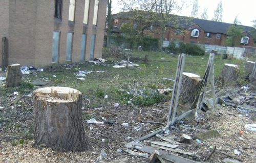 Click to view SALFORD PRECINCT TREE CULL