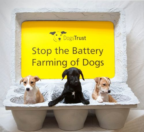 Click to view Dogs Trust Against Puppy Farms