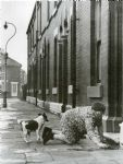 Shirley Baker Without Trace: Manchester and Salford in the 1960s