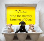 Dogs Trust Against Puppy Farms